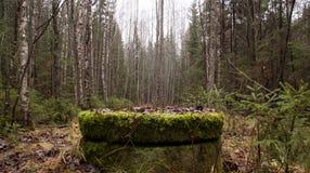 Gut in einem Wald Lizenzfreie Stockfotografie