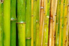 Gute Qualitätsnatürliche Bambusbeschaffenheit Stockfotos