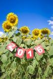 Guten Rutsch ins Neue Jahr 2016 auf Sonnenblumenfeld Stockbilder