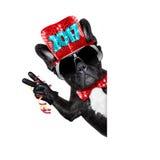 Guten Rutsch ins Neue Jahr-Hund-celberation Stockbilder