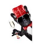 Guten Rutsch ins Neue Jahr-Hund-celberation Lizenzfreies Stockbild