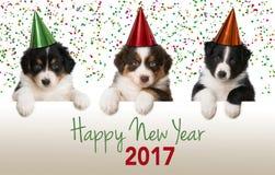 Guten Rutsch ins Neue Jahr-Welpen Lizenzfreies Stockfoto