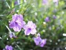 Gutenmorgen Mit Blumenstrauß Von Blumen Stockbild Bild Von