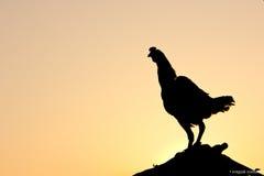 Gutenmorgen mit Huhn Lizenzfreie Stockbilder