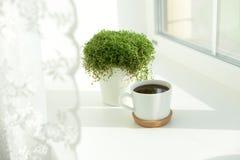gutenmorgen, Tasse Kaffee am Fenster, Grünpflanze lizenzfreie stockfotos