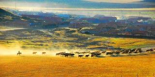 guter Morgen der Ranch Stockbilder