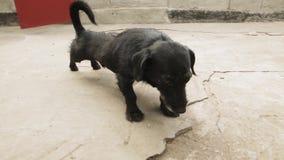 Guter Umherirrender oder inländischer Hund gähnt und liegt auf der Betondecke Über dem Augenhöhe-Handschuß des netten Hundes a ze stock video