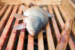 Gutted carp Royalty Free Stock Photo
