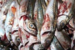 Gutted Mackerel Stock Photo