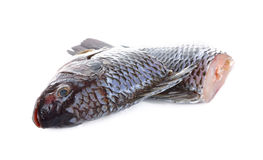 Gutted and scaled Nile Tilapia fish on white Stock Images