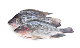 Gutted and scaled Nile Tilapia fish on white Royalty Free Stock Photography