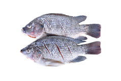 Gutted, scaled and sliced Nile Tilapia fish on white background Stock Images
