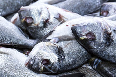 Gutted sea fish Stock Image