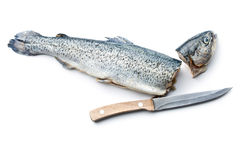 The gutted trout with knife Stock Image