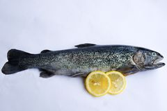 Gutted trout with lemon. Fresh gutted trout on white background with two lemons Stock Photography
