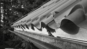 Gutter. Chute, Roof, House, Top, Metal, Black, White, Tree Stock Photos