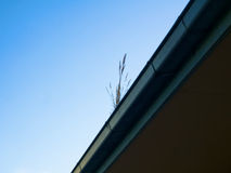 Gutter cleaning Stock Images