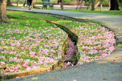 Gutter in the garden. Pink flowers on ground and drain gutter in the garden Royalty Free Stock Image