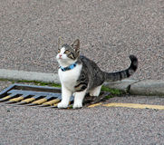 Gutter kitty Stock Photography