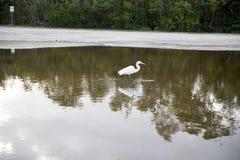 Gutter reflection bird in the water. Gutter reflection  bird in the water Royalty Free Stock Photography