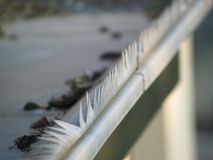 Gutter on the roof. With bent spikes Stock Photo