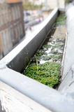 Gutter weed. On roof top Stock Images