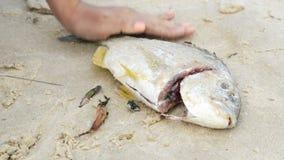 Gutting Fresh Fish stock video footage