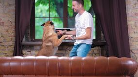 The guy and the Belgian Malinois dance at home near the sofa