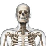 Guy bending his neck Stock Image