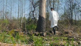 The guy comes to tree bark in the wood. The guy walking through the felling. The guy comes to tree bark in the wood. The camera lens is covered tree and rises up stock video footage