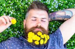 Guy with dandelions in beard relaxing, top view. Bearded man with dandelion flowers in beard lay on meadow, grass. Background. Man with beard on calm face put Royalty Free Stock Image