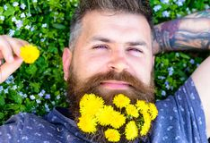 Guy with dandelions in beard relaxing, top view. Bearded man with dandelion flowers in beard lay on meadow, grass. Background. Relaxation concept. Man with Royalty Free Stock Photos