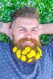 Guy with dandelions in beard relaxing, top view. Breeziness concept. Man with beard on smiling face put hands behind. Head. Bearded man with dandelion flowers stock photography
