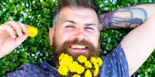 Guy with dandelions in beard relaxing, top view. Relaxation concept. Man with beard on happy face put hand behind head. Bearded man with dandelion flowers in Stock Image