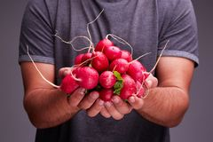 A guy in a dark T-shirt keeps a fresh radish. Stock Photography