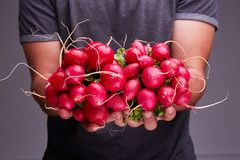 A guy in a dark T-shirt keeps a fresh radish. Royalty Free Stock Images