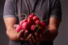 A guy in a dark T-shirt keeps a fresh radish. Stock Image