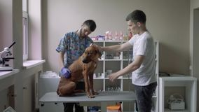 Guy with a dog on in a veterinary clinic. The vet and the owner pat the dog on the table in the veterinary clinic stock footage