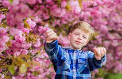 Guy enjoying cherry blossom sakura. Tender bloom. Cute child enjoy warm spring day. Visit sakura garden. Boy teen posing. Near sakura. Child on pink flowers of stock images