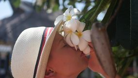 Guy enjoying the scent of flowering tropical trees.Plumeria stock video footage