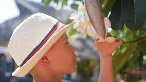 Guy enjoying the scent of flowering tropical trees.Plumeria stock video