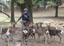 The guy feeds the deer in the park. Stock Image