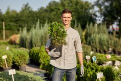 Guy gardener holds in his hand a pot with plant in the wonderful nursery-garden on a warm sunny day royalty free stock image