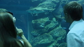 The guy and the girl are delighted by different fishes floating in an underground aquarium.  stock video