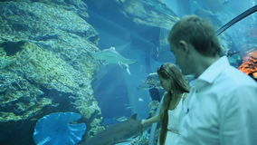 The guy and the girl are delighted by different fishes floating in an underground aquarium.  stock video footage