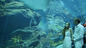The guy and the girl are delighted by different fishes floating in an underground aquarium stock footage