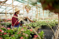 Guy and girl gardeners  in a straw hats choose pots with flower seedlings in greenhouse on a sunny day. royalty free stock photos