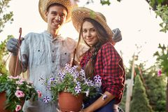 Guy and girl gardeners in a straw hats hold pots with wonderful petunia on the garden path in  on a sunny day. stock photo