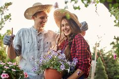 Guy and girl gardeners in a straw hats hold pots with wonderful petunia on the garden path in  on a sunny day. royalty free stock photo