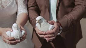 The guy and the girl are holding two white pigeons. The camera only looks at the hands. The bride is on the left. The groom stands on the right. Gently holding stock video